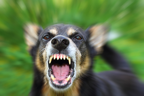 Dog_Bite accident Pomponio Injury Law